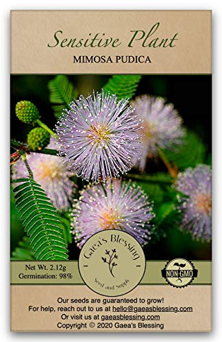 Gaea's Blessing Seeds - Sensitive Plant Seeds - with Easy to Follow Planting Instructions - Non-GMO Seeds, Touch Me Not, Mimosa Pudica, Moving Plant, Shameful Plant, Shy Plant, 98% Germination Rate