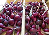 Seeds Red Cipollini Onion Seeds Italian Onion Red Marble Fresh Seeds Easy Grow #SES01YN (1000 Seeds or 1/8 OZ)