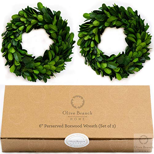 Olive Branch Home Boxwood Wreath Preserved with Gift Box - Mini Indoor 6 Inch (2 Pack)