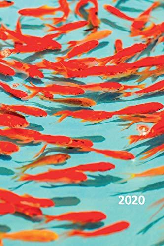 Best Schooling Freshwater Aquarium Fish