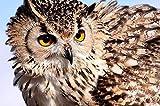 HSYE Tangram 500 Búho Observación de Aves Animal 52x38cm