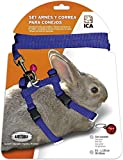 ICA DA1027 Set de Arnés y Correa para Conejos, Azul