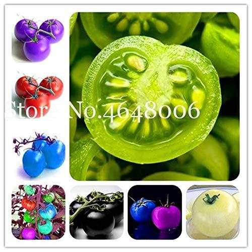 Shopvise 50 Pcs vert Graines de tomates Heirloom légumes Graines Nutritif fruits arc-en-légumes non-OGM Bricolage jardin Semences: 100 Mixed