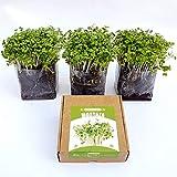 Garden Pocket Microvegetales Pop UP - Kit de Interior de germinados de Semillas ecológicas x3 (Mostaza)