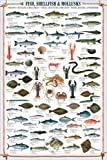 Educational Shellfish & Mollusks - Fische Fische Krusten