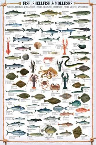 Educational Shellfish & Mollusks - Fische Fische Krusten und Weichtiere Bildung Lernposter Druck