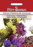 Dürr-Samen - 70 x Statice Prachtmischung Saatgut für Balkon, Garten & Hochbeet - Bunte Blumen Samen Mischung 60 cm einjährig - Blumensamen Saat für zum Pflanzen - Blumen für Sträuße und Trockenblumen