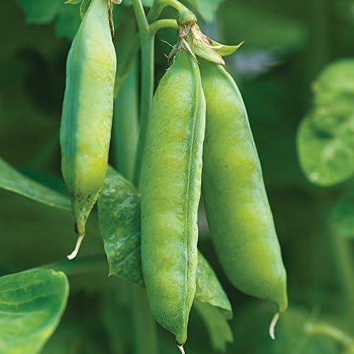 Burpee Blue Bantam Heirloom Pea Seeds 200 seeds product image