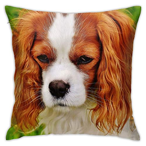 jhgfd7523 Throw Pillow Cover Promotional Cavalier King Charles Spaniel Decorative Pillow Case Home Decor Square 18x18 Inches Pillowcase