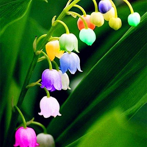 50 pcs/sac Muguet Graines de fleurs rares Indoor de Bell Orchidée arôme riche Bonsai plantes en pot Balcon bricolage jardin Violet