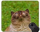 Yanteng Alfombrillas de ratón, Gato exótico de Pelo Corto Gato Persa Alfombrillas de ratón Personalizadas, Alfombrilla de ratón con Borde Cosido