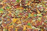 Aquazoo 10 Liter Teich Flocken Flockenfutter Teichflocke Teichfutter Fischfutter 1kg