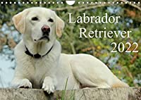 Labrador Retriever 2022 (Wandkalender 2022 DIN A4 quer): Hundekalender - Faszination Labrador (Monatskalender, 14 Seiten )