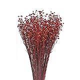 NAUHUAA Ramo de Flores Secas Flores Artificiales Roja Flor de Acacia Seca Natural Flor Familiar Restaurante Cafetería Decoración Flor Falsa