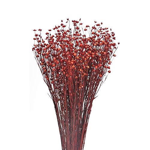 NAHUAA Natürliche Trockenblume Deko Blumen Getrocknete Pflanzen Trocken für Vase Tischdeko Hause Inneneinrichtungen Hotel Hochzeit Dekoration Rot