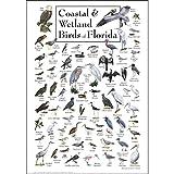 Earth Sky + Water Poster - Coastal & Wetland Birds of