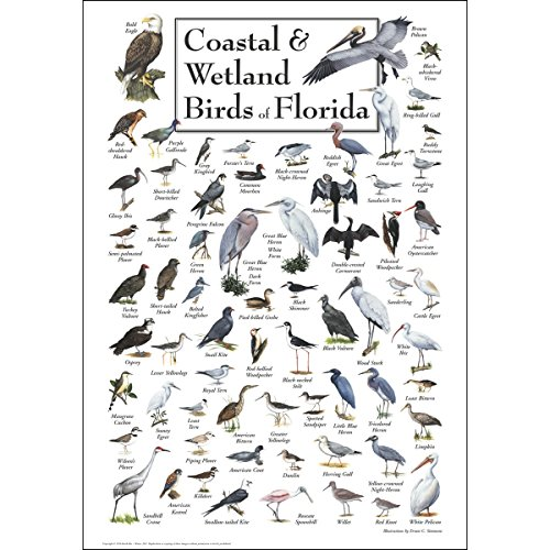 Earth Sky + Water Poster - Coastal & Wetland Birds of Florida