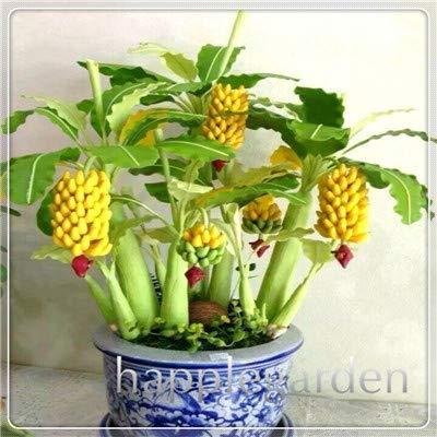 Bloom Green Co. 50 PC-Zwergbanane Bonsai-Baum, Tropischer Obstbaum, Indoor-Bonsai Balkon Blume für Haus Pflanzen, Keimungsrate von 95%: 1