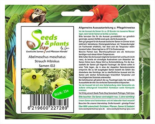 Stk - 15x Abelmoschus moschatus Hibiskus Strauch Pflanzen - Samen ID2 - Seeds Plants Shop Samenbank Pfullingen Patrik Ipsa