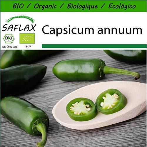 SAFLAX - BIO - Chili - Early Jalapeno - 20 Samen - Mit keimfreiem Anzuchtsubstrat - Capsicum annuum