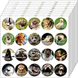 560 Pieces Animal Reward Stickers Hilarious Motivational Positive Teacher Stickers for Kids, 28 Vibrant Designs Fun Animal Stickers Come in Envelope for All Ages Students Grading (560)