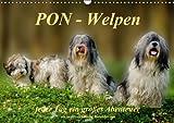PON - Welpen, jeder Tag ein großes Abenteuer/Geburtstagskalender (Wandkalender immerwährend DIN A3 quer)