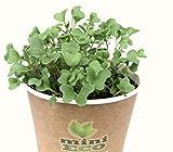 Los Microgreens Semillas Para Brotes Brócoli. Kit de Cultivo de Hierbas. Aproximadamente 2400 semillas, 8g. Bio Producto 100% Orgánico Superfood Brocoli Brécol Brócoli Bróculi