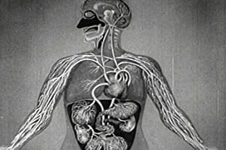 The Heart (1950) [DVD] – A vintage Science & Biology Film