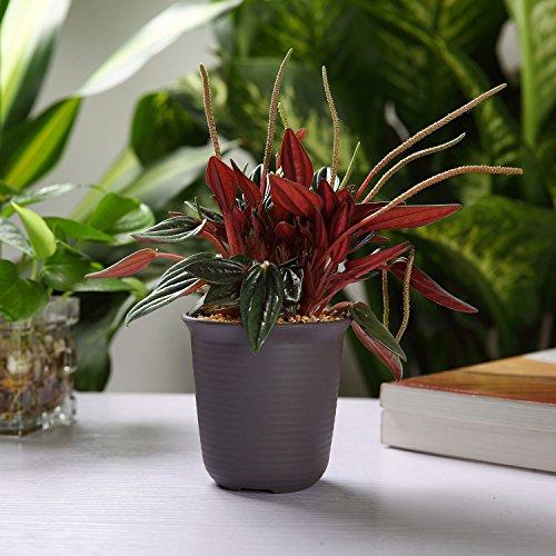 12CM プラスチック製 植木鉢 多肉植物 サボテン鉢 トレイ付き ダークグレー 10点セット