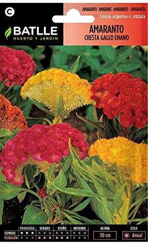 Semillas de Flores - Amaranto Cresta de Gallo - Batlle