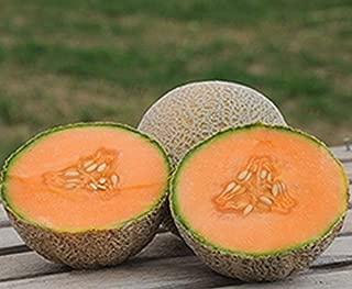 David's Garden Seeds Fruit Cantaloupe Tam Uvalde SL9222 (Orange) 50 Non-GMO, Heirloom Seeds