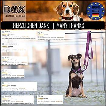 DDOXX Laisse Chien Nylon, Réglable en 3 Position, 2 m   Nombreuses Couleurs & Tailles   pour Petit, Moyen Gros & Grand   Double laisses Ajustable Chat Chiot   XS, Noir, 2m