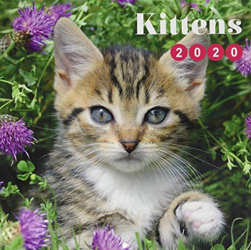 ERIK - Calendario de pared 2020 Cat Simon K. & Greg C, 30 x 30 cm