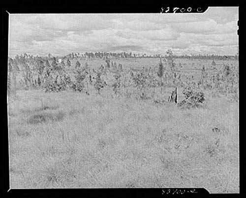 HistoricalFindings Photo: Baker,Florida,FL,Okaloosa County,Farm Security Administration,1942,FSA,4