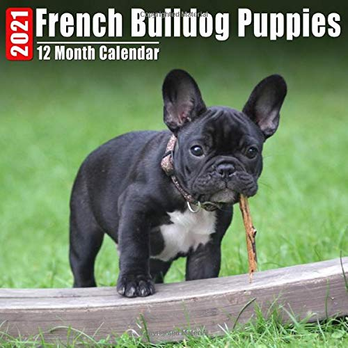 Mini Calendar 2021 French Bulldog Puppies: Cute French Bulldog Puppy Photos Monthly Small Calendar With Inspirational Quotes each Month