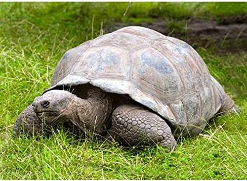 3 D Ansichtskarte Schildkröte, Postkarte Wackelkarte Hologrammkarte Tier Landschildkröte
