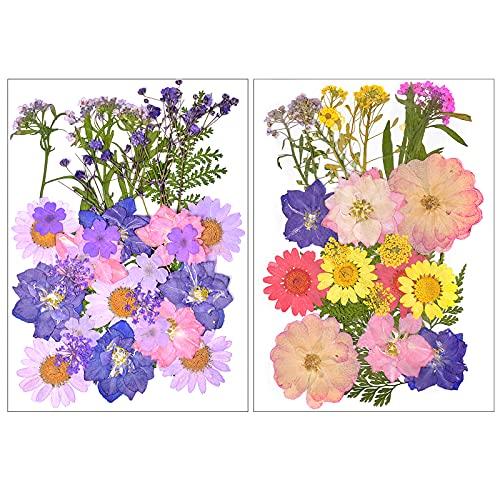 Flores Secas Manualidades Resina flores secas  Marca Fodlon