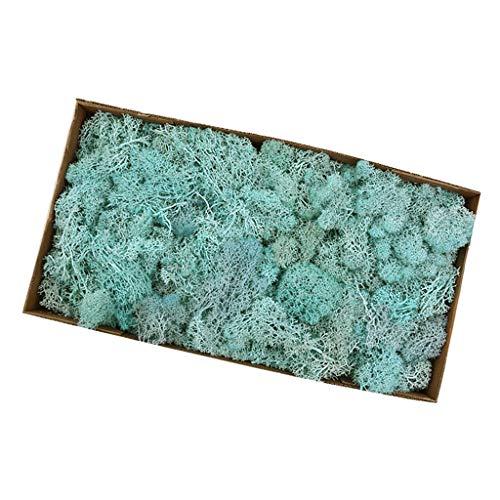 Fenteer Mousse De Renne Naturelle Artificielle Pour Garniture De Fleur DIY - lac bleu