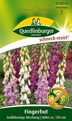 Fingerhut, Digitalis purpurea ca. 300 Samen