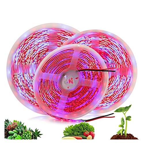 DZHT Luz De Crecimiento De Plantas 5M / Lote Impermeable Luz De Tira De LED De Espectro Completo 300 LED 5050 Luz De Planta De Flor De Chip Para Hidroponía De Invernadero (Color : 3 red 1 blue)