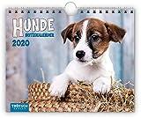 Notizkalender 'Hunde' 2020: 20 x 16 cm