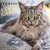 Just Maine Coon Cats 2022 Wall Calendar (Cat Breed)