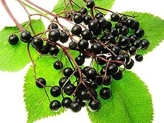 Homegrown Elderberry Seeds, Elderberry Quantity (30)