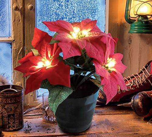 Bonetti Künstlicher Weihnachtsstern mit LED Beleuchtung, Kunstpflanze beleuchtet mit 20 LED, batteriebetrieben, wirkt täuschend echt - Weihnachtsdeko