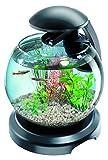 Tetra Cascade Globe Noire, Aquarium pour Poisson Combattant ou Poisson Rouge 6,8L...