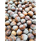 Hazelnuts 1kg - Raw Hazelnuts in Shell – Small, untreated, Unwashed Ideal for Chipmunk and Squirrel Food