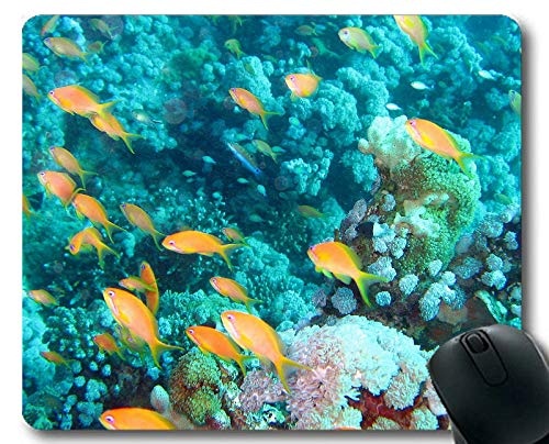 Gaming Mouse Pads,Jelly Fish Theme Full of Personality Mouse pad
