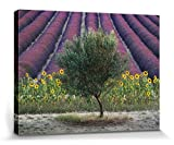1art1 Lavendel - Olive Tree In Provence, France, David