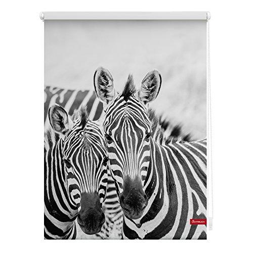 Lichtblick Rollo Klemmfix, 100 x 150 cm mit Motiv Zebra - Schwarz Weiß Montage ohne Bohren, moderner Sicht-und Sonnenschutz, Motivrollo, lichtdurchlässig & Blickdicht