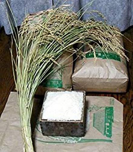 当年産 食べたことのないおいしさ絶唱のコシヒカリ。新米 玄米 無農薬 レンゲの香りの甘いコシヒカリ 5kg